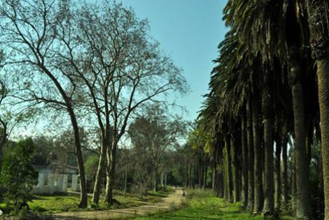 Parque Tomkinson. Foto: Lorena Canelas.